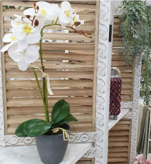 orchidea bianca a pianta